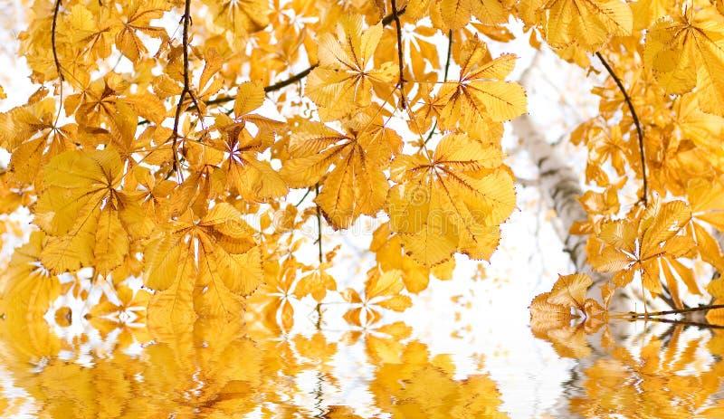 Herbst backround lizenzfreie stockfotografie