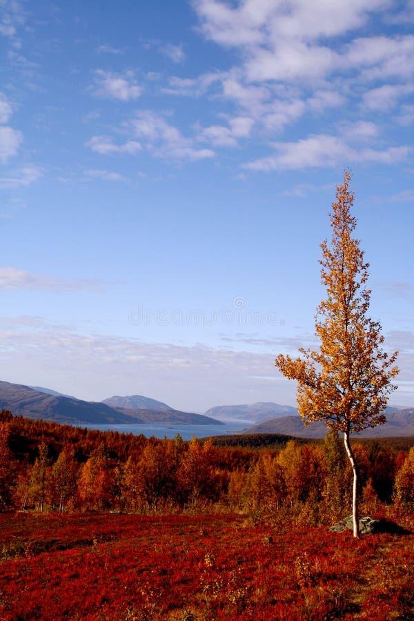 Herbst bei Lappland stockfotos