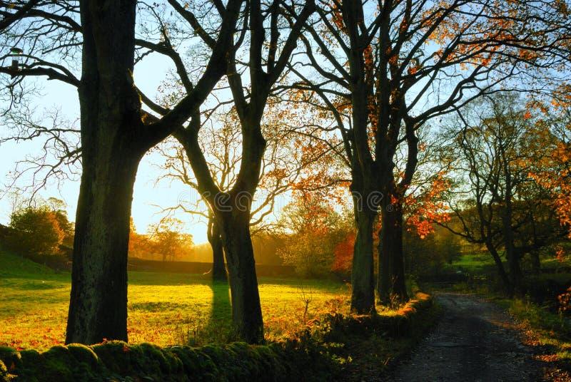 Herbst bei Wycollar lizenzfreies stockbild