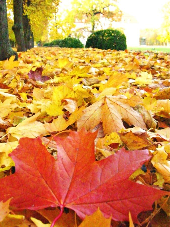 Herbst in Berlin stockbilder