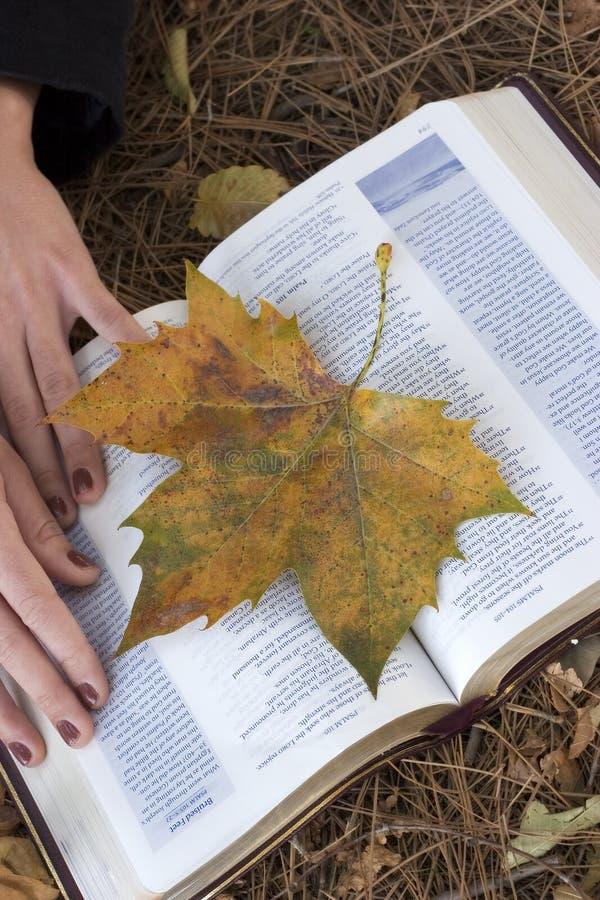 Herbst-Bibel lizenzfreie stockfotografie