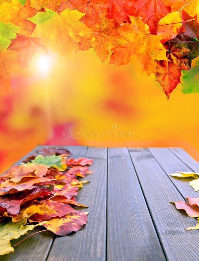 Herbst-Blätter über hölzernem Hintergrund stockbild