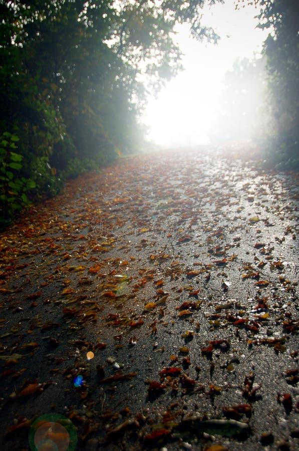 Herbst-Blätter auf dem Pfad lizenzfreie stockfotografie