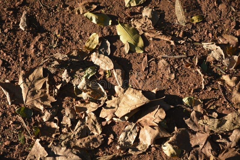 Herbst: Blätter auf meinem Garten stockfotos