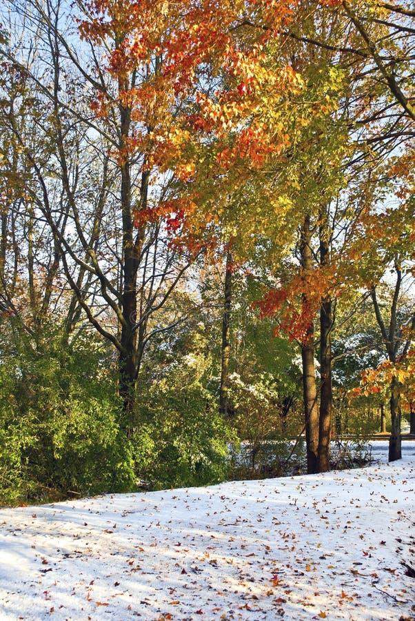 Herbst-Blätter auf Schnee lizenzfreies stockfoto