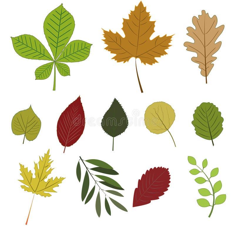 Herbst-Blätter eingestellt lizenzfreie abbildung