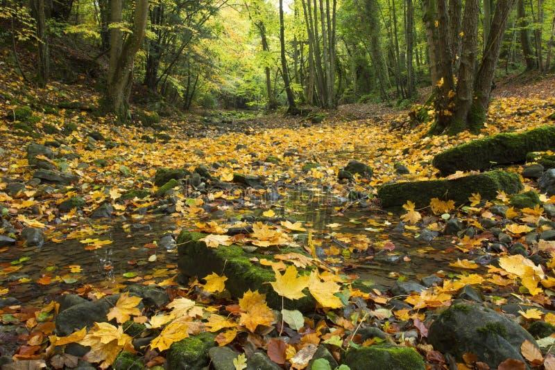 Herbst-Blätter im trockenen Fluss-Bett bei Nant Alyn lizenzfreies stockbild
