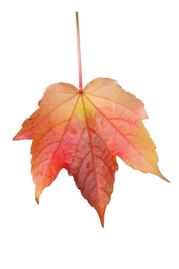 Herbst-Blatt stockbild