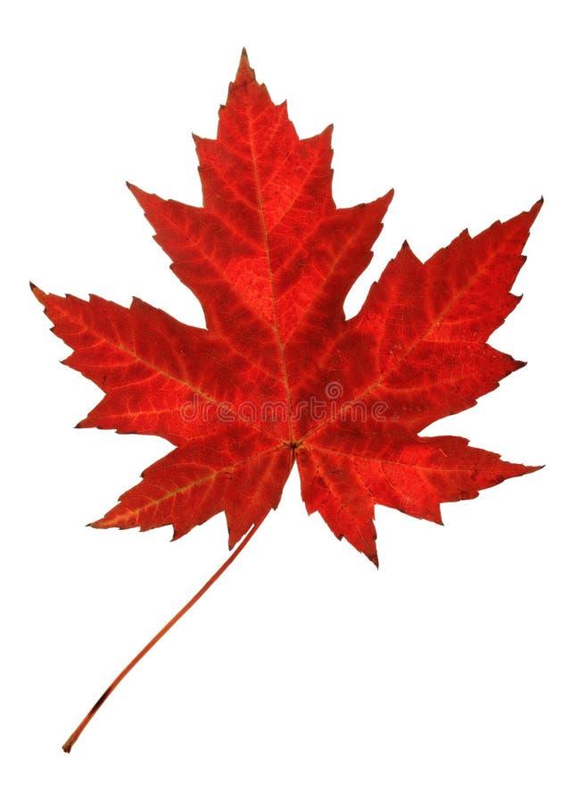 Herbst-Blatt lizenzfreie stockbilder