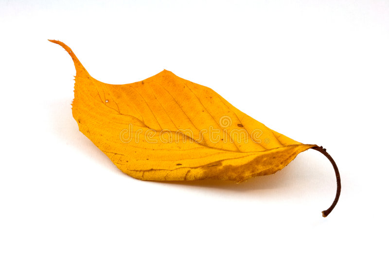 Herbst-Blatt lizenzfreie stockfotos