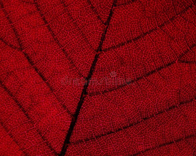 Download Herbst-Blatt-Detail stockfoto. Bild von zelle, abschluß - 26772