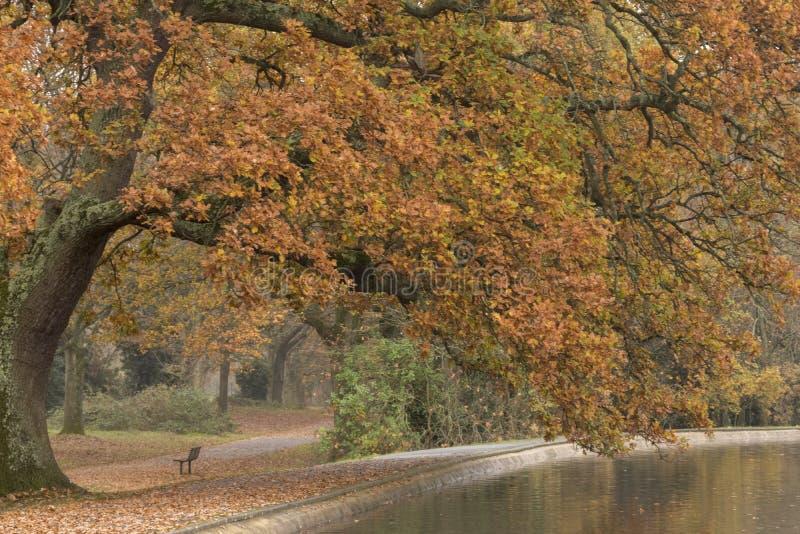 Herbst am Boating See, Southampton Common stockbild