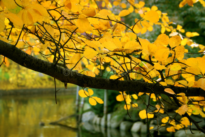 Herbst in Boston lizenzfreie stockfotos