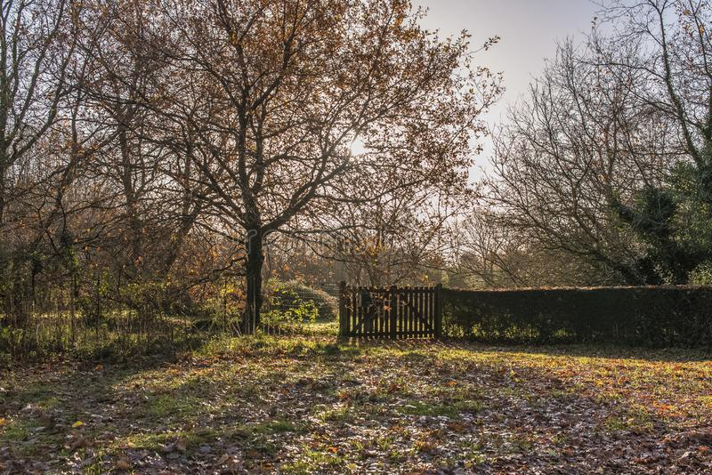 Herbst in Bretagne stockbild