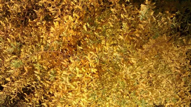 Herbst Busch стоковая фотография rf