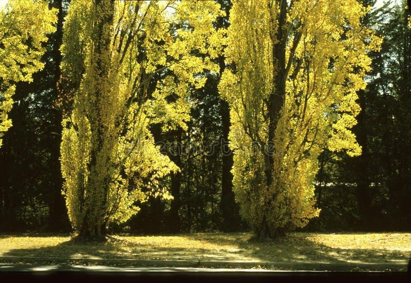 Herbst in Canberra lizenzfreie stockbilder