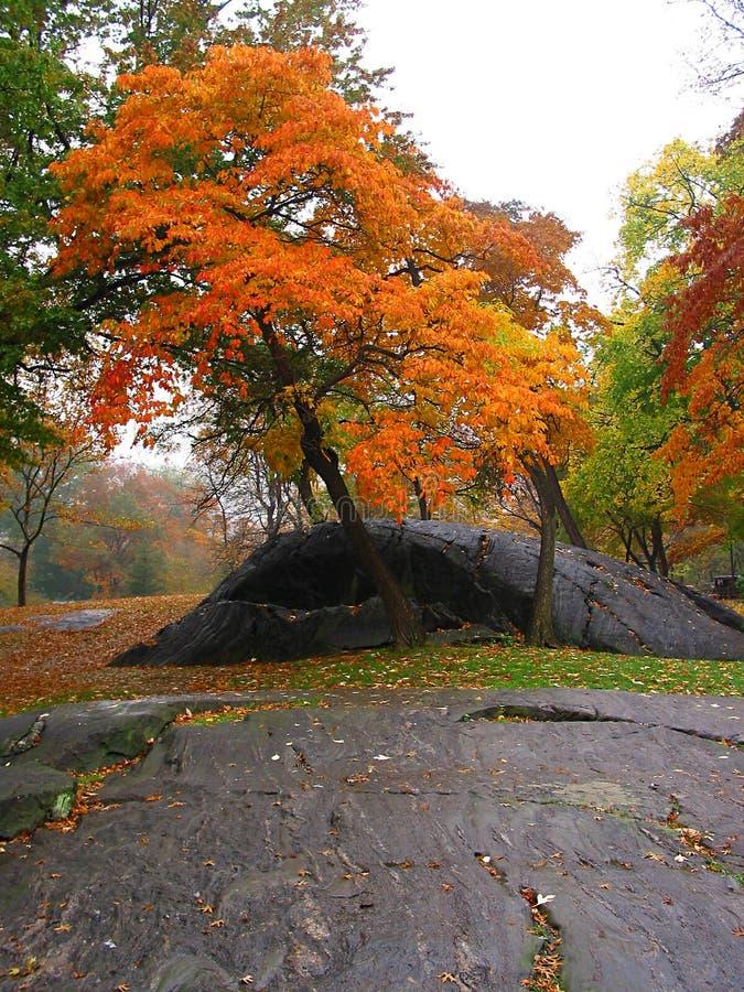 Download Herbst in Central Park stockbild. Bild von nave, felsen - 34873