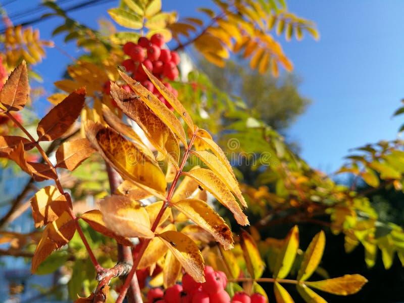 Herbst in Chabarowsk-Stadt lizenzfreie stockfotografie