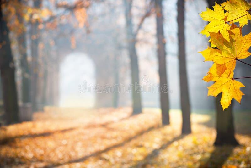 Herbst colonade mit einem Zugang stockfotos