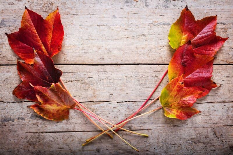 Herbst deco mit Blättern stockfotografie