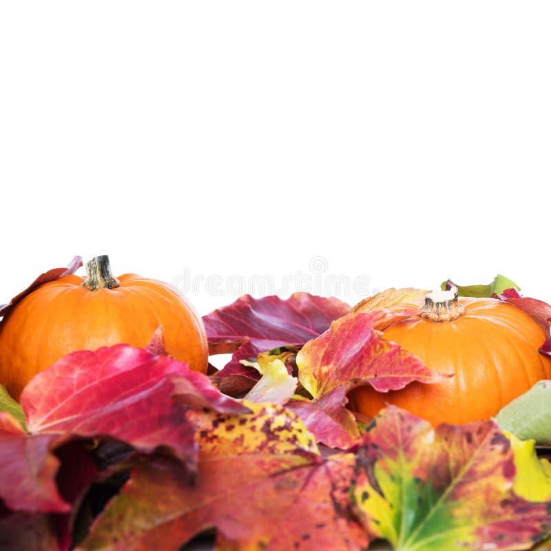 Herbst deco mit Blättern stockbilder
