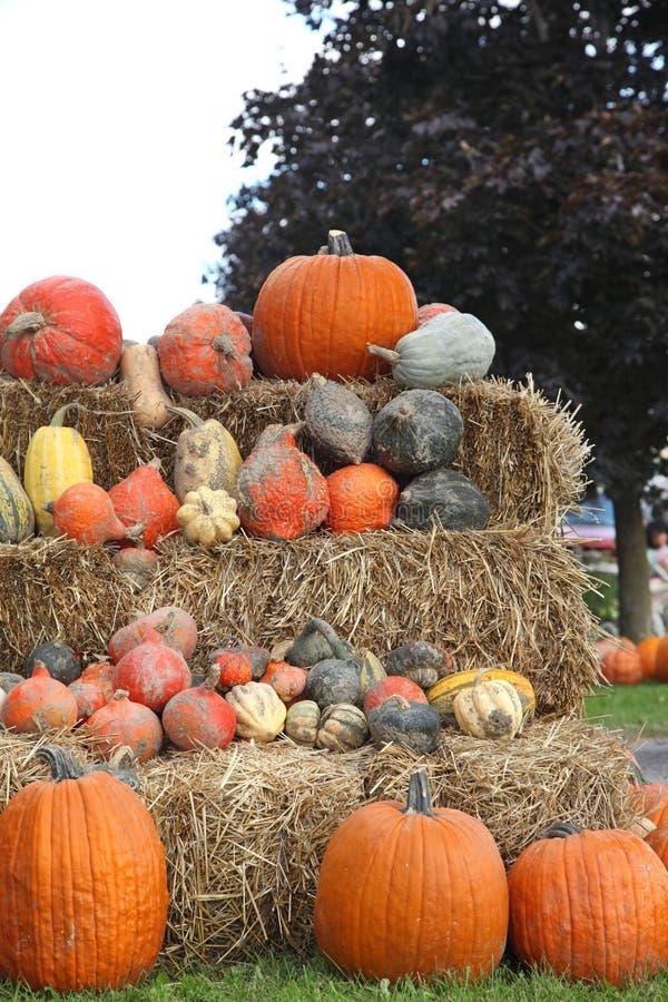 Herbst-Dekoration mit Kürbisen lizenzfreie stockfotografie