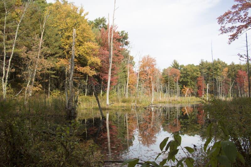 Herbst in dem Teich stockfotografie