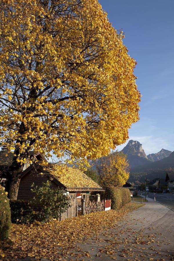 Herbst in den Alpen lizenzfreies stockbild