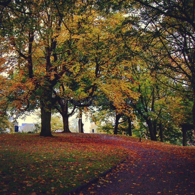 Herbst in den Niederlanden stockfoto