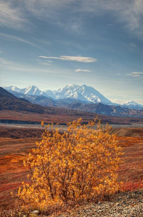 Herbst Denali im Nationalpark - Montierung Mckinley lizenzfreie stockbilder