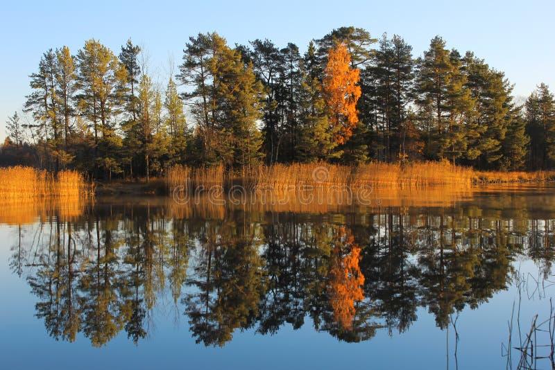 Herbst der Ladogasee, Karelien, Russland lizenzfreies stockfoto