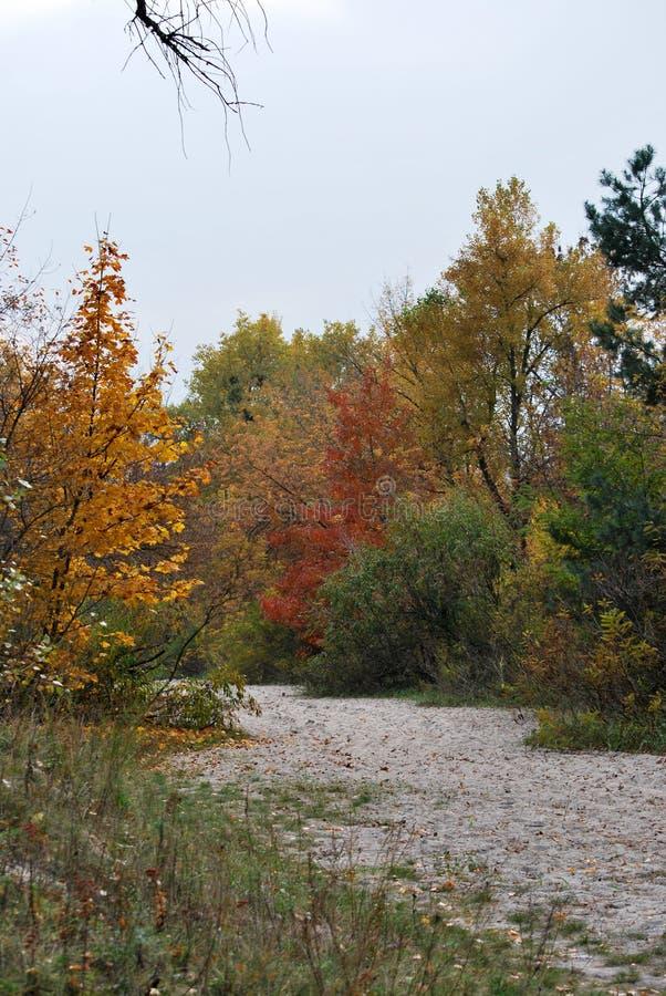 Herbst in der Stadt lizenzfreie stockbilder