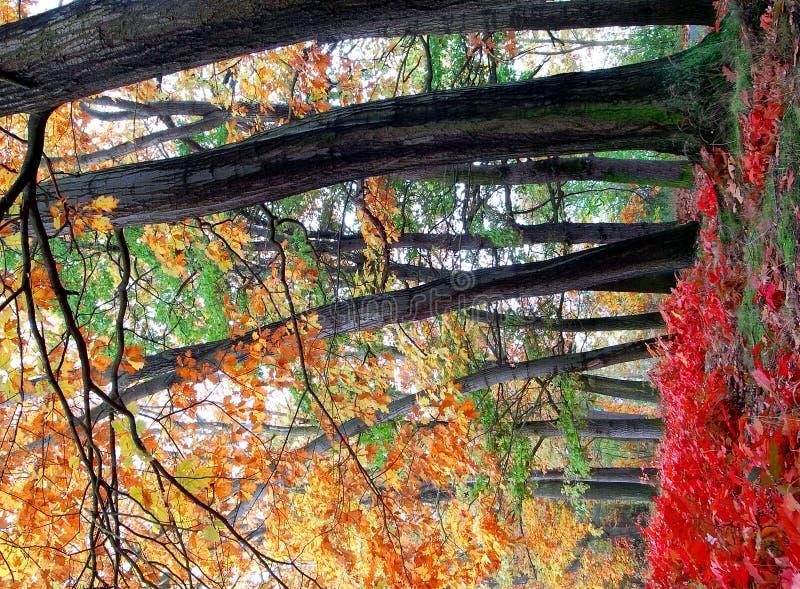 Herbst in der Tschechischen Republik lizenzfreie stockfotografie
