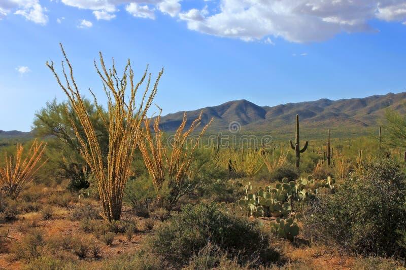 Herbst in der Wüste stockbilder