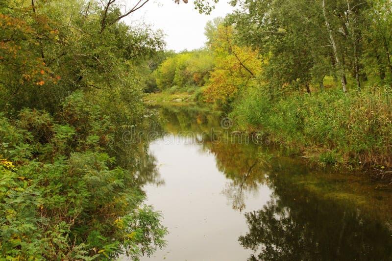 Herbst, der Waldfluß lizenzfreie stockbilder