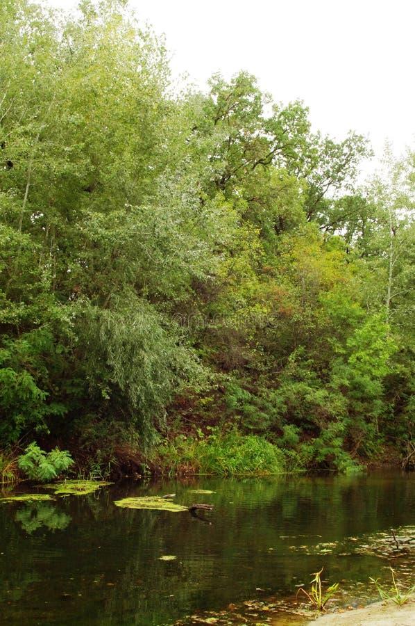 Herbst, der Waldfluß stockfotografie