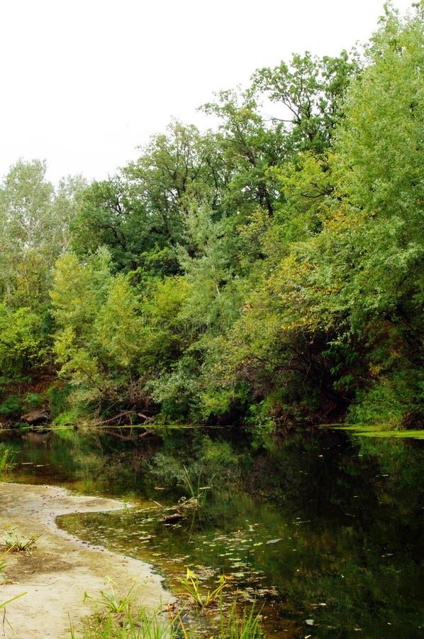 Herbst, der Waldfluß lizenzfreies stockfoto