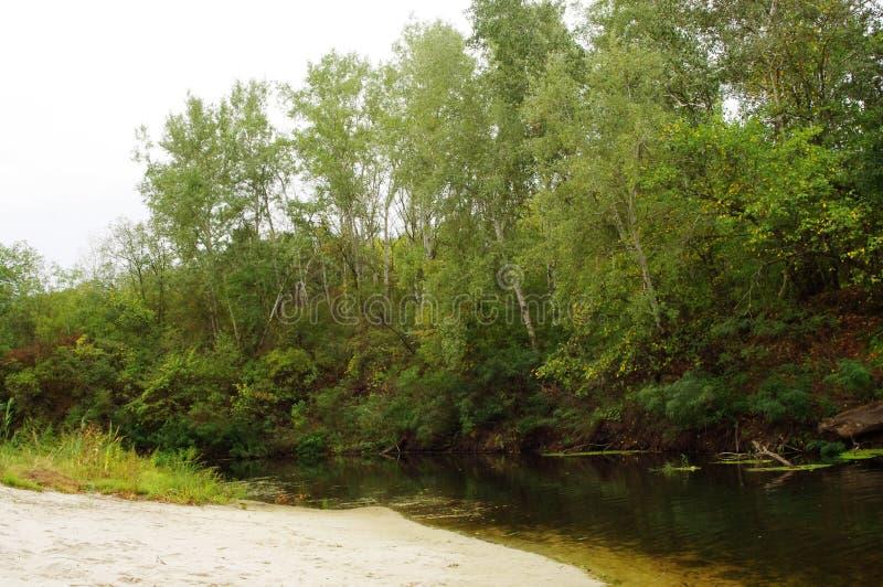 Herbst, der Waldfluß lizenzfreie stockfotografie