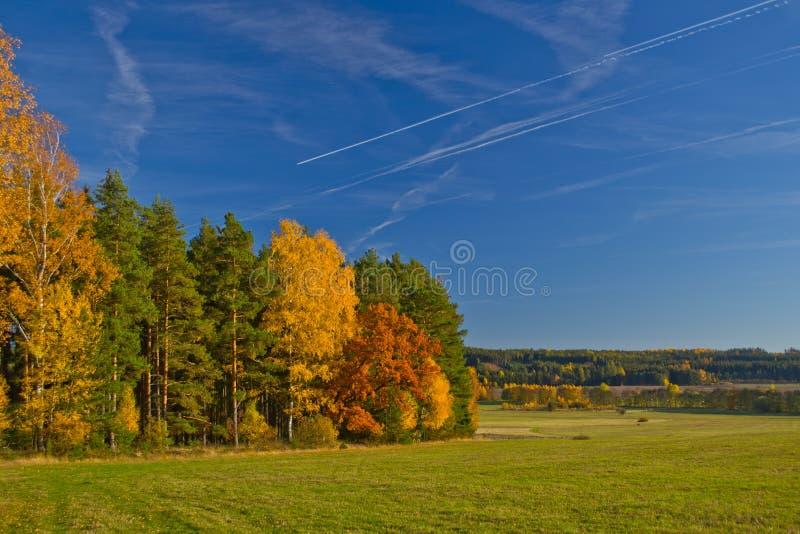 Herbst des HimmelBaum- des Waldeskiefernwolkenhorizontfichtenbirkengrasnatur-verheerenden Feuers lizenzfreie stockfotografie