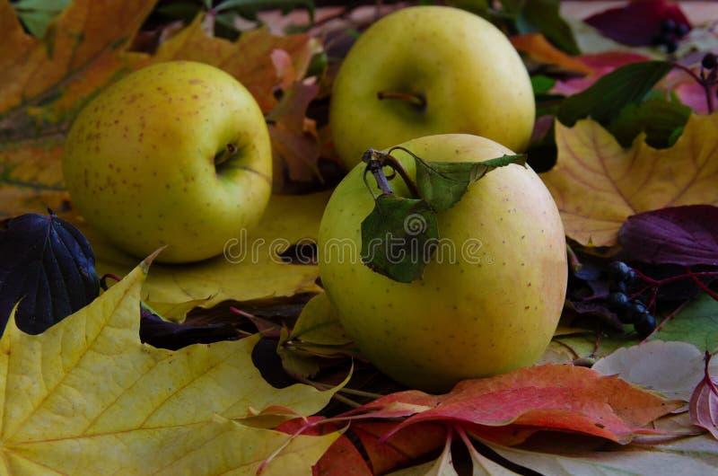 Herbst, die Ernte von Äpfeln gegen den Hintergrund stockfotografie