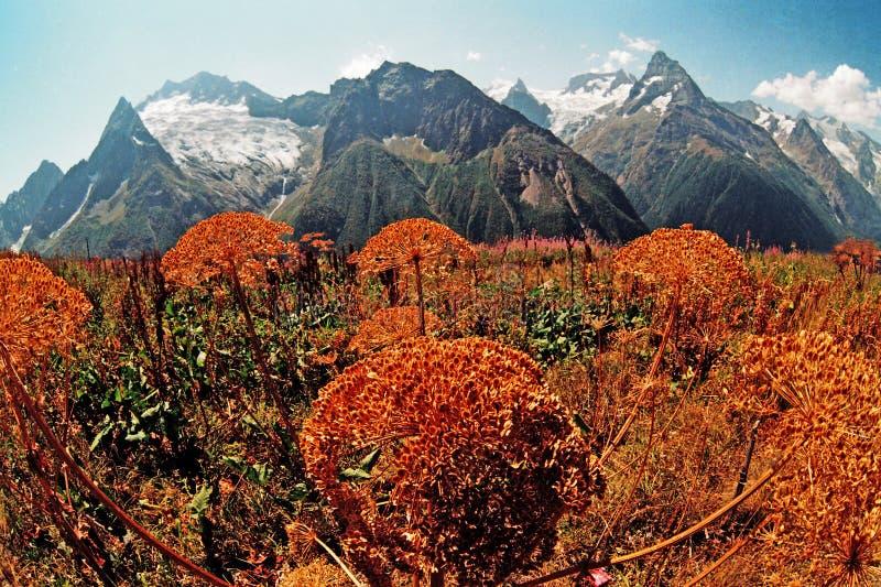 Herbst in Dombai. stockfotos