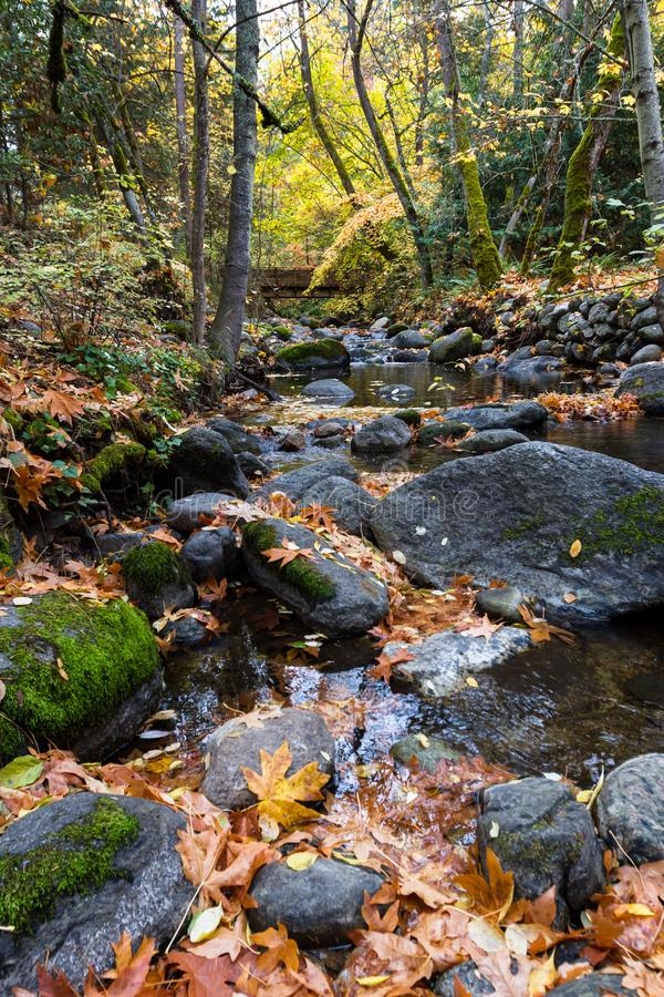 Herbst durch The Creek stockfoto