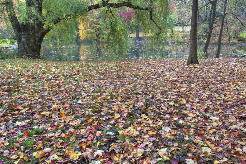Herbst durch den See lizenzfreie stockfotos