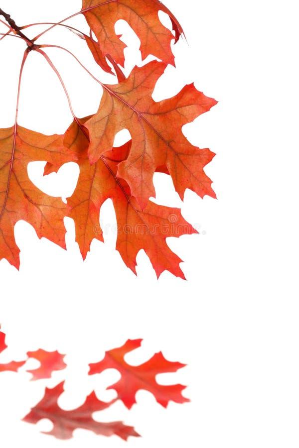 Herbst-Eichen-Baum-Blatt-Muster stockfotos