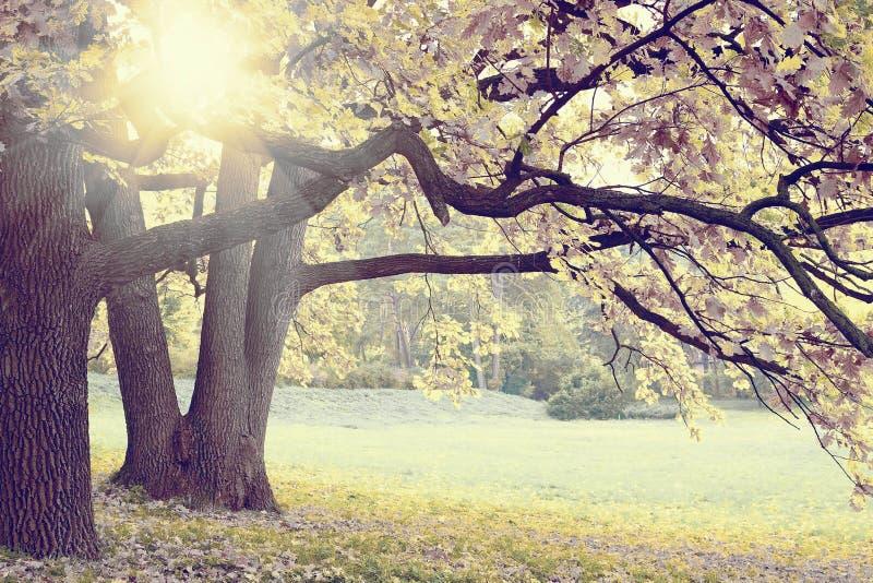 Herbst in einem Forrest stockbild