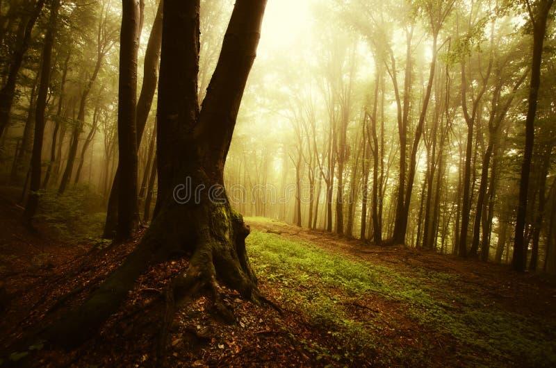 Herbst in einem mysteriösen Wald mit Nebel stockfoto