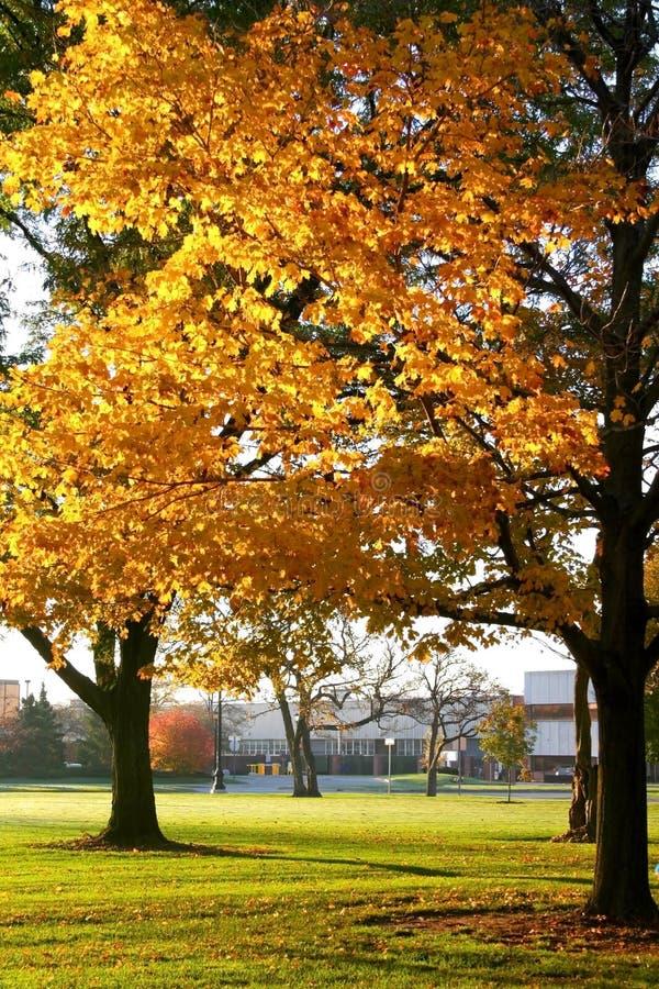 Herbst in einem Park stockbilder