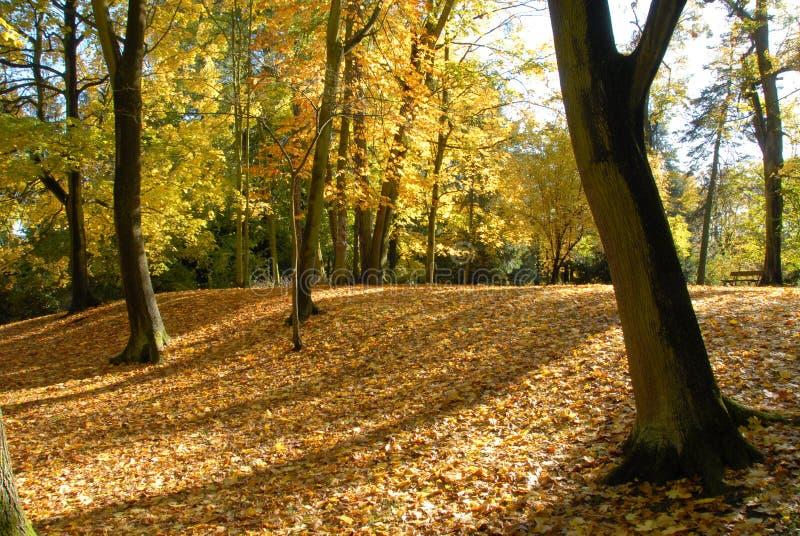 Herbst in einem Park lizenzfreie stockbilder