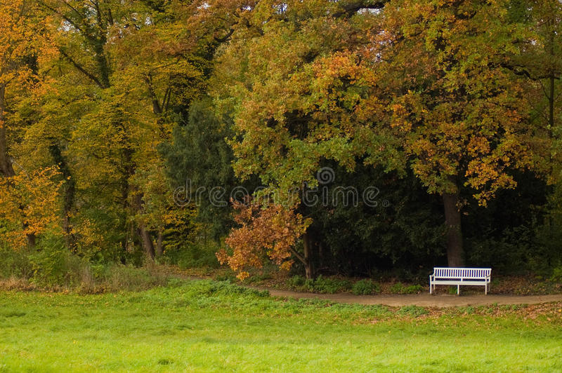 Herbst in einem Park lizenzfreies stockfoto