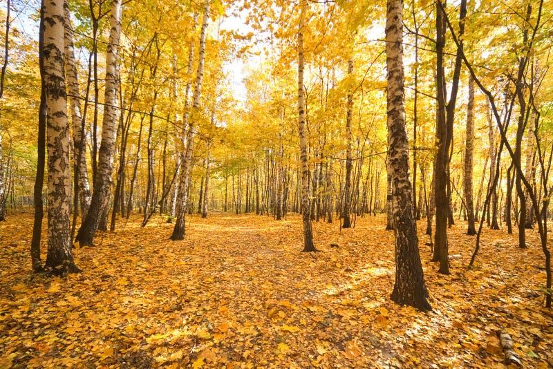 Herbst in einem Wald stockfotos